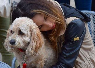 hund og jente