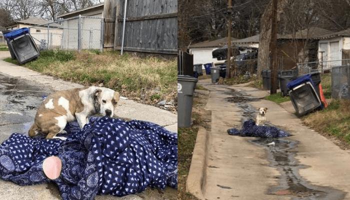 hund på teppe